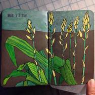 slefever-sketchbook-orchids-spikes.jpg