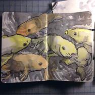 slefever-sketchbook-koi at selby gardens