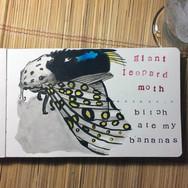 slefever-sketchbook-giant leopard moth.j