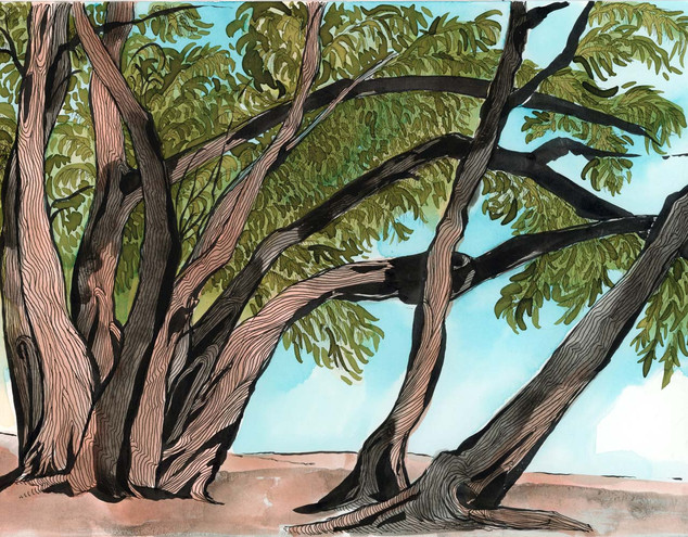 [Australian Pines (winter), South Lido]