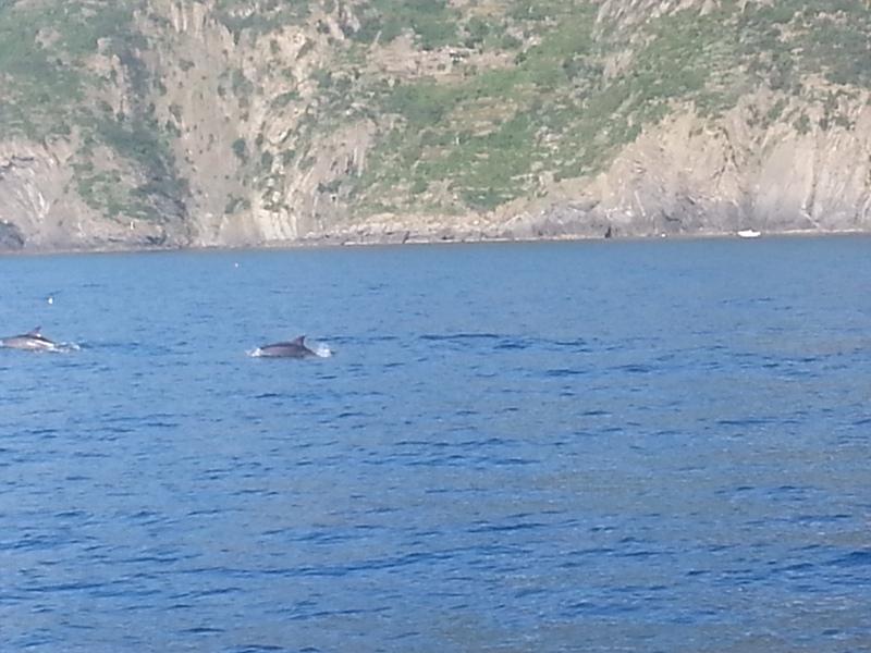 Встреча с дельфинами .