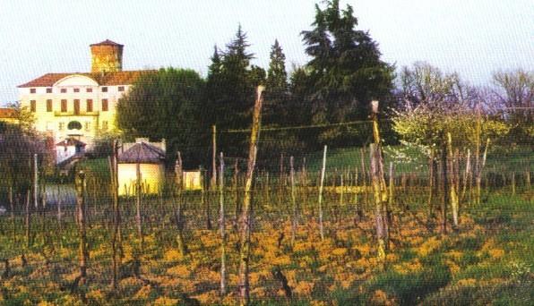 Индивидуальная дегустация вин в винодельческом хозяйстве Альто Монферрато.