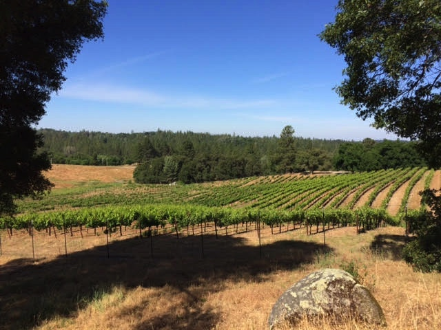 vinyard pic2