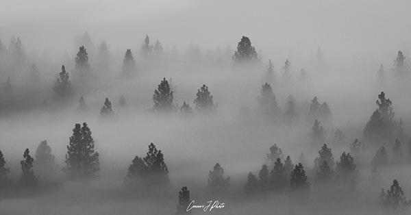 above the fog 2