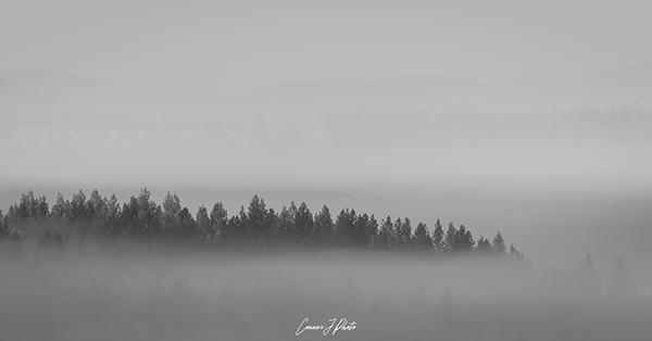 above the fog 1
