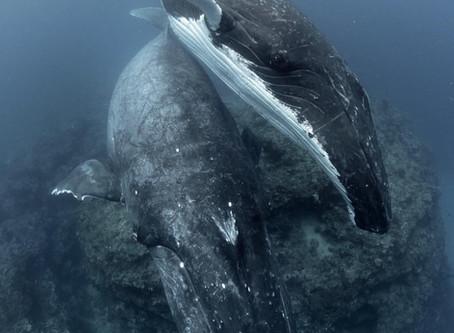 Whale Swim Yoga and Freediving Retreat 2018