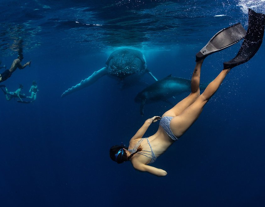 Whale swimming and Freediving, Yoga and Freediving, Whales, Whale Swimming, Swimming with Whales, Freediving with Whales