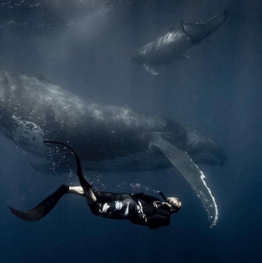 Lauren Freediving with mother and baby Humpback Whales