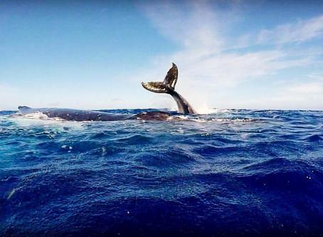 2016 October Whale Swim Retreat