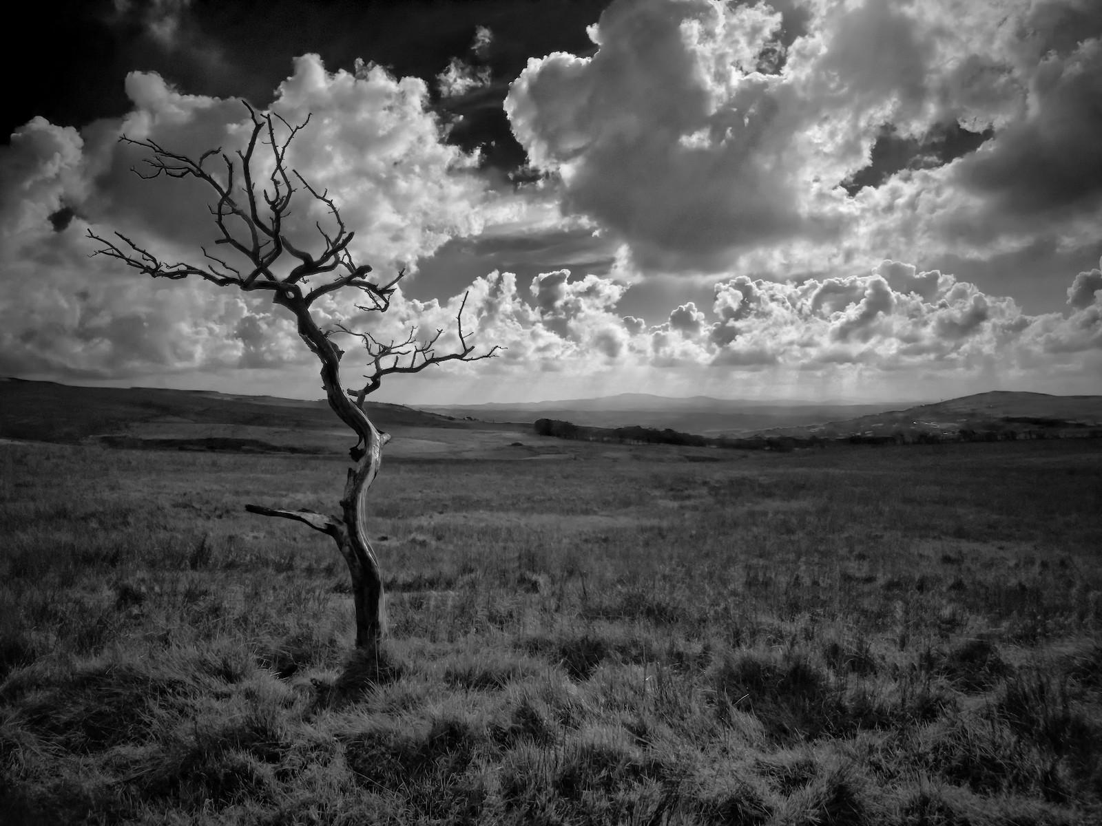 'Divis Tree 2' by Jonny Clark (9 marks)  -  Shorts Camera Club