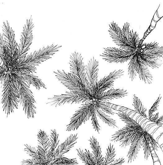 croquis de palmiers bali indonésie
