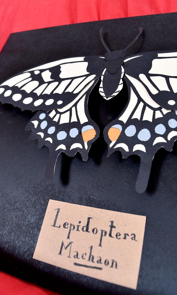 machaon blanc papier découpé papillon