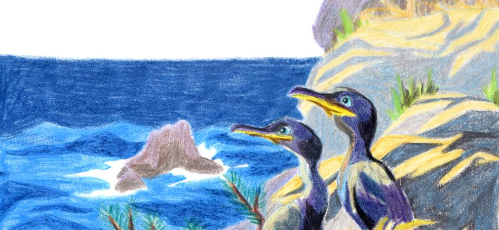 Cormorans oiseaux crayons de couleur