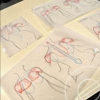 Cours d'anatomie