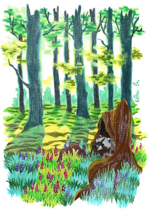 raton-laveur crayons de couleur sous-bois elsa b.