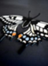 papillon blanc exotique papier découpé