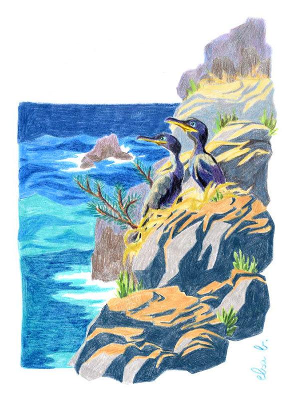 Cormorans sur une falaise illustration aux crayons de couleur