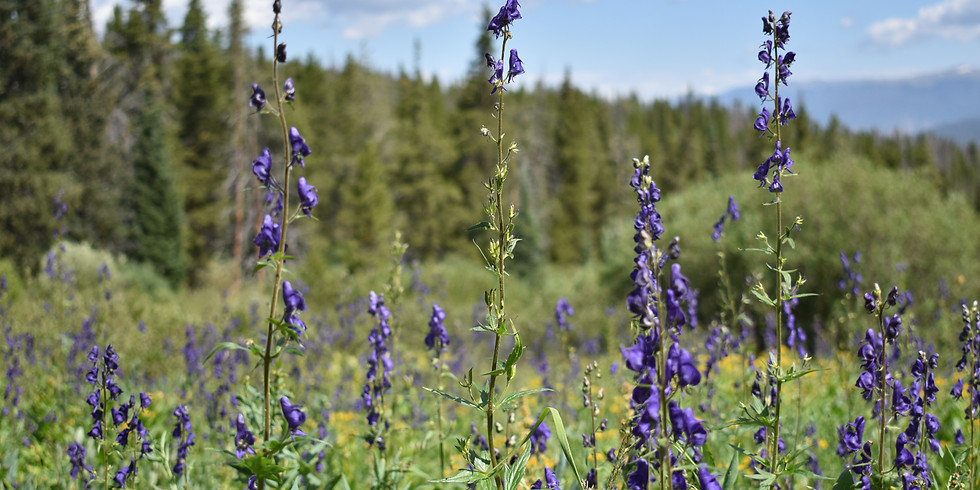 August Trail Clean-Up Hike at Three Sisters Trailhead   (1)