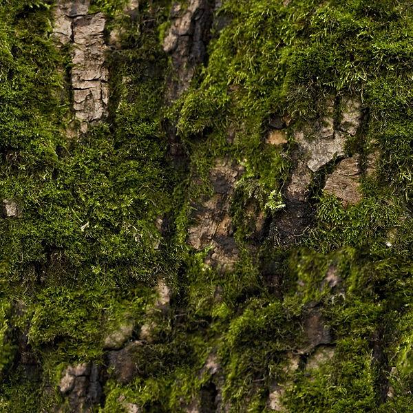 22_bark-moss-texture-seamless.jpg