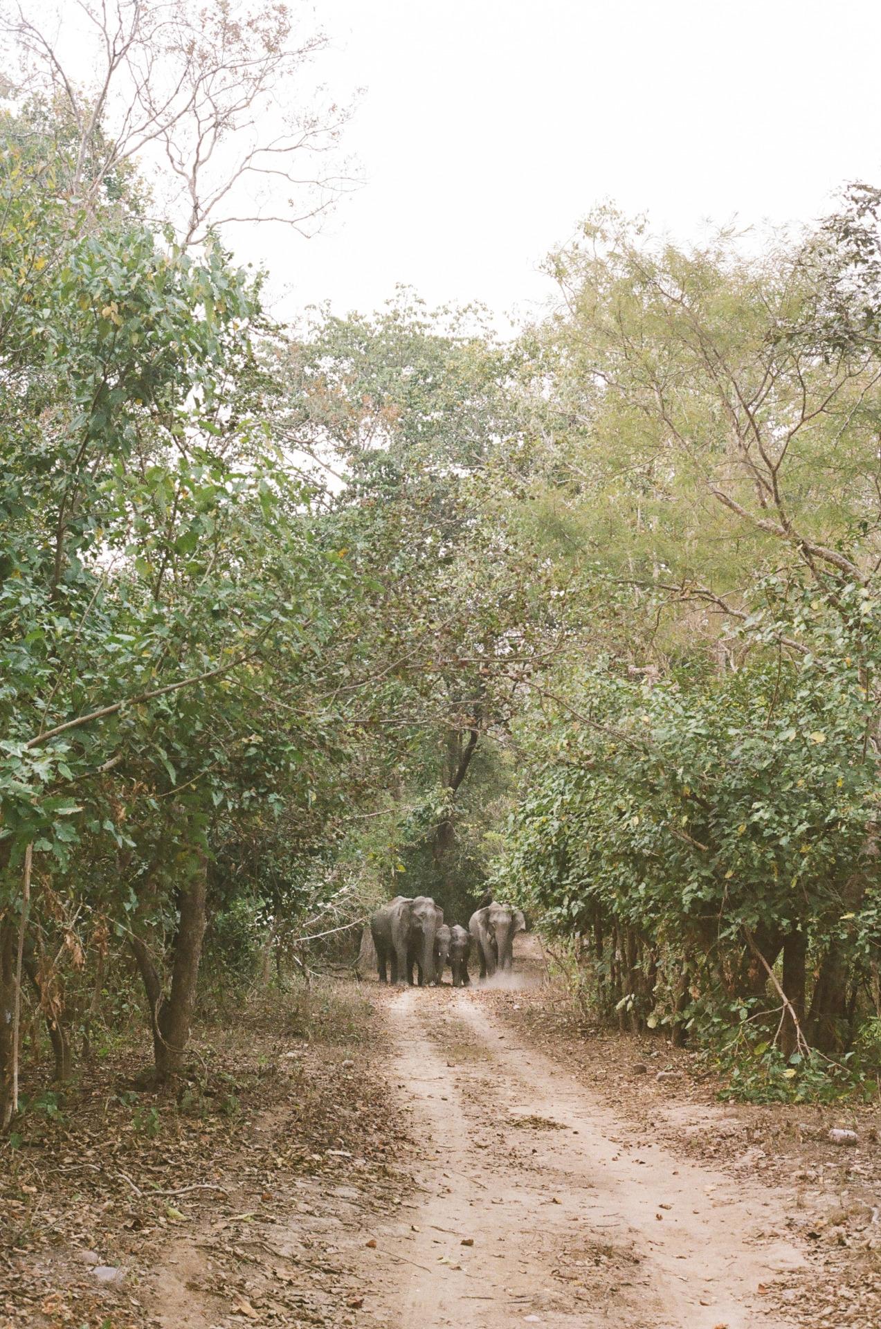 Elephant Family - Uttarakhand, India