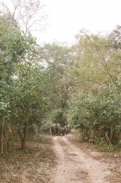 Jim Corbett National Park, India