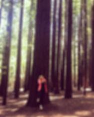 #Peaceful #RedwoodForest #EnjoyingNature