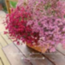 リモニュームが市場より入荷してます♡ 発色が綺麗なリモニューム…_._お花がプリ