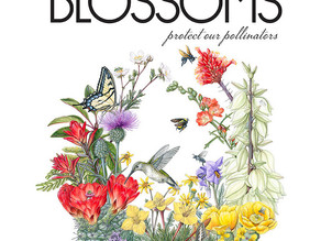 Pollinator Pathway Northeast Featured in Winter 2021 Issue of 2 Million Blossoms