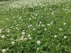 No Mow May is Over….Now What?