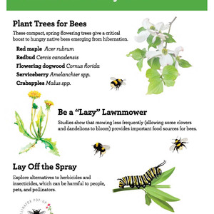 For Beginner and Family-friendly Pollinator Resources, Check Out This Pop-Up Online Toolkit!