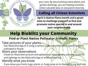 April is Native Plant Month. Help Celebrate by Bioblitzing Your Community