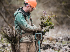 Need matching funds to plant native trees in 2021?