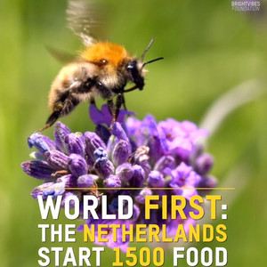 In the Netherlands, Food Banks for Bees