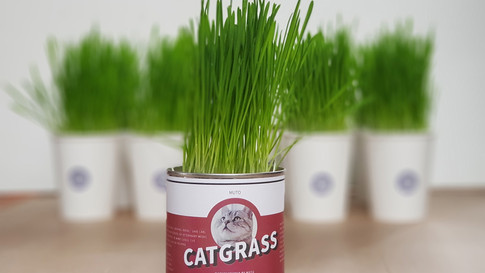 Live Cat Grass upcycle