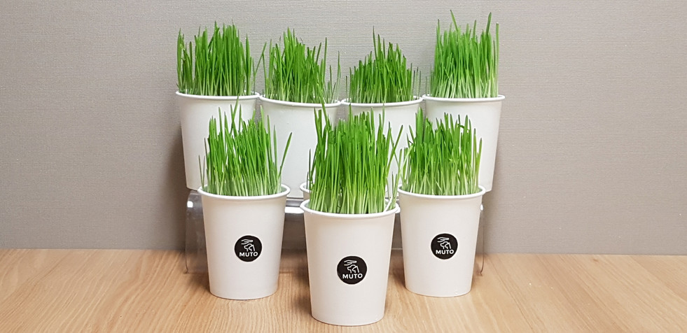 MUTO Cat Grass