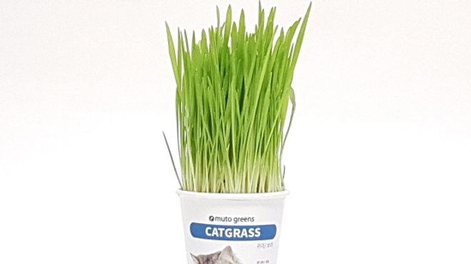 Muto Greens Barley, Oat Live Cat Grass