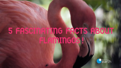 Flamingo Day text on screen