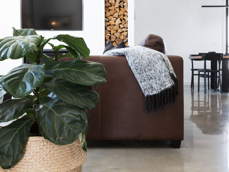 How to keep your indoor plants healthy and vibrant