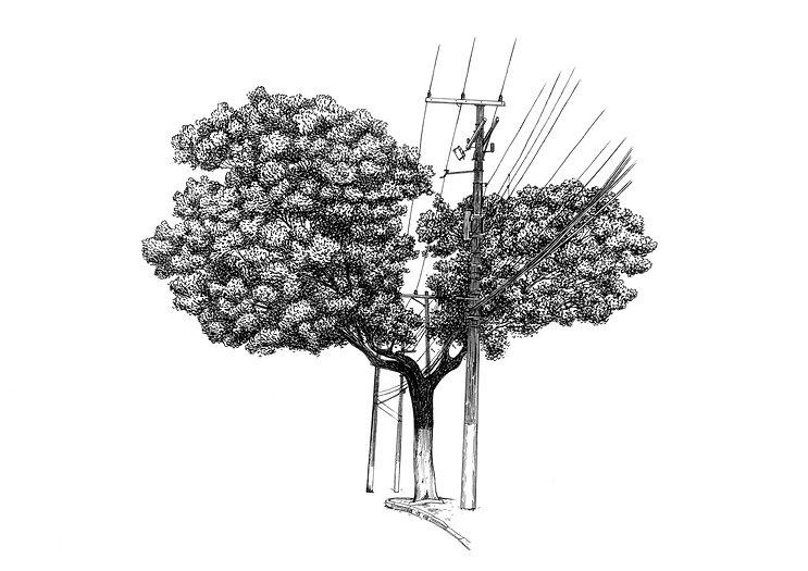 Múltiplos-Árvore nª2.jpg