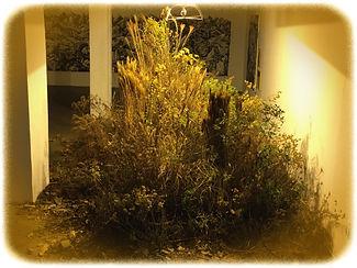 A.F.-Vontade de natureza-09.jpg