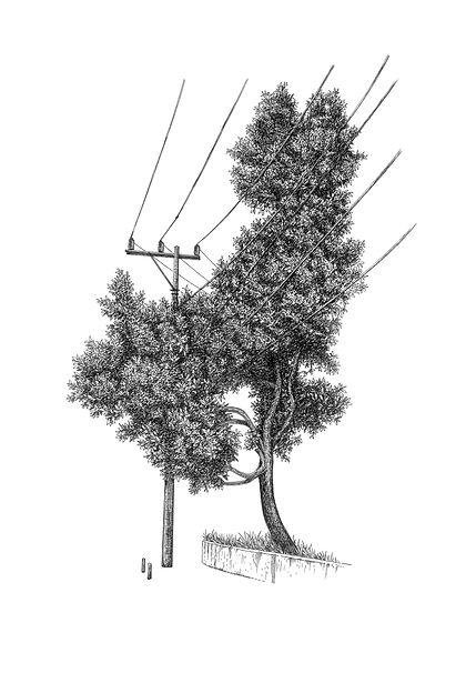 Múltiplos-Árvore nª1.jpg