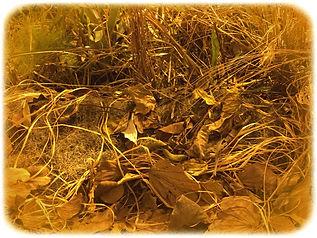 A.F.-Vontade de natureza-03.jpg