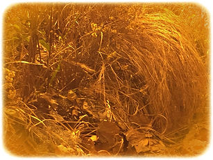 A.F.-Vontade de natureza-01.jpg