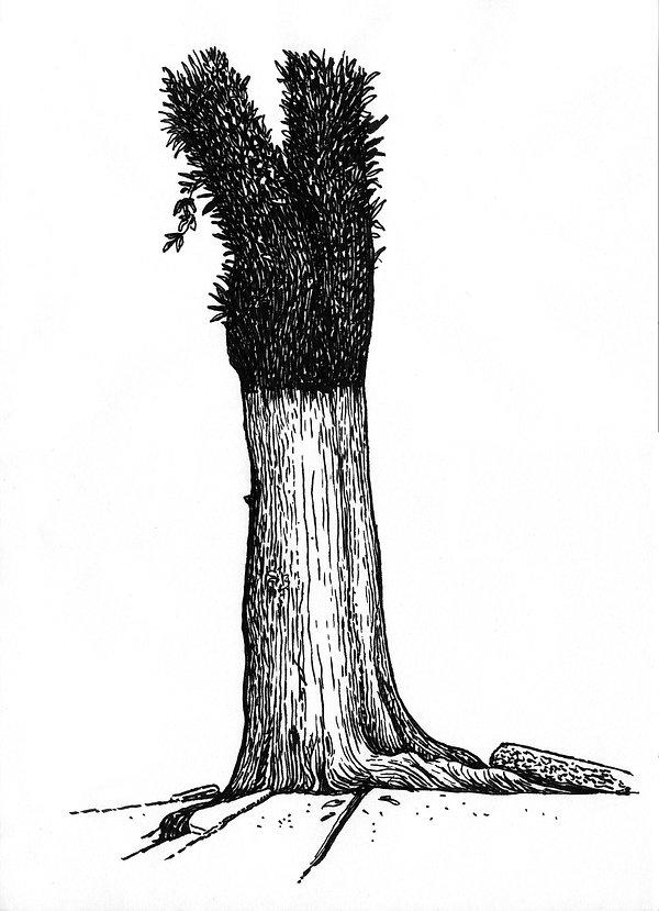 Estudos-árvores 02.jpg