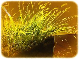 A.F.-Vontade de natureza-08.jpg