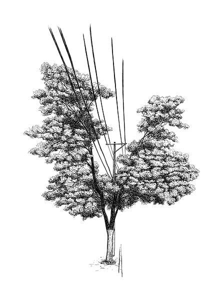 Múltiplos-Árvore nª5.jpg