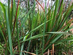 CHIC GRASS