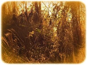 A.F.-Vontade de natureza-04.jpg