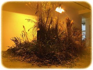 A.F.-Vontade de natureza-06.jpg