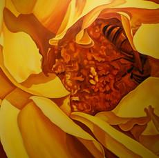 Succulent Rose